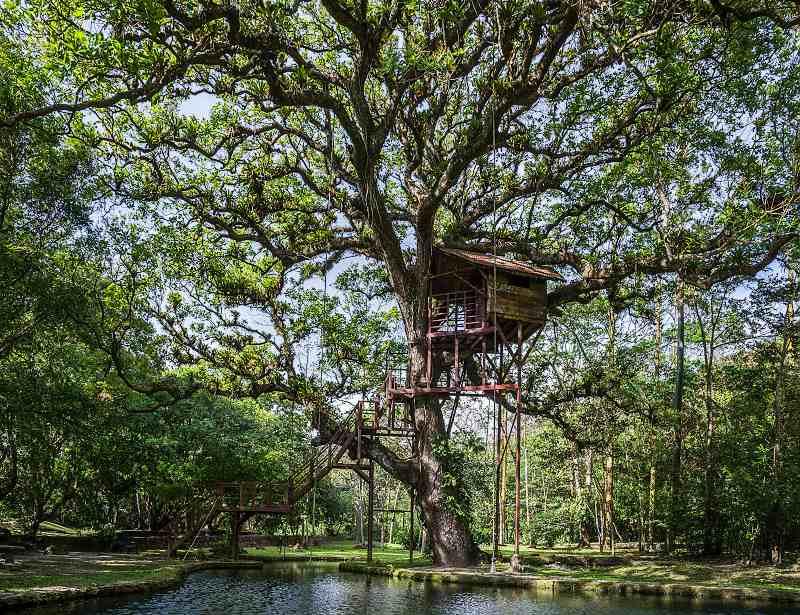 Dobrodružstvo a relax na strome