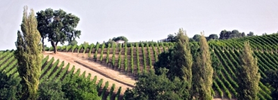 Spomienky na víno